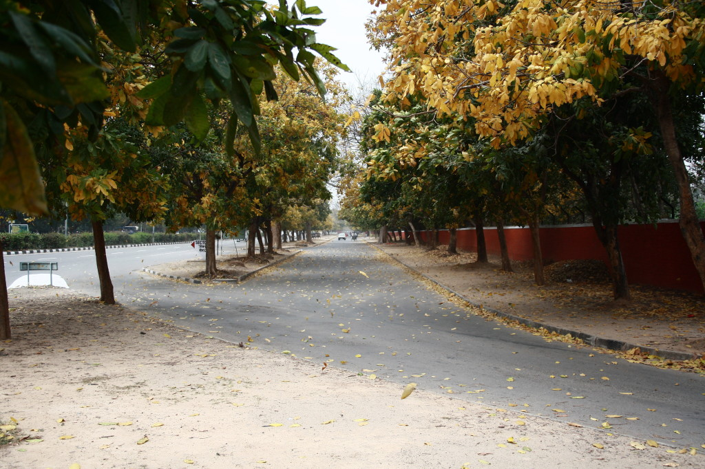 Chandigarh- the city beautiful, you just fall in love with the city !