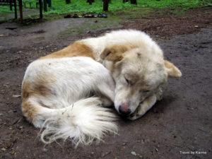 The sleeping devotee
