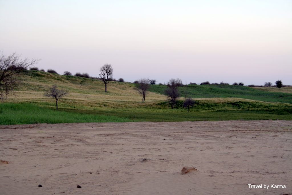 The Green and the Arid co-exisitng